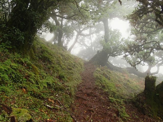 Durch den Feenwald auf Madeira | Waldspaziergang.org