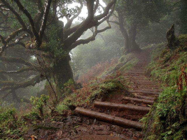Fanal Madeira | Waldspaziergang.org
