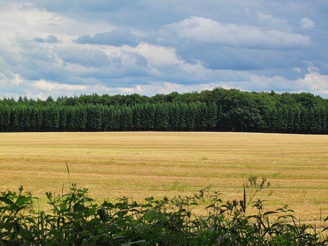 Feld um Wotersen | Waldspaziergang.org