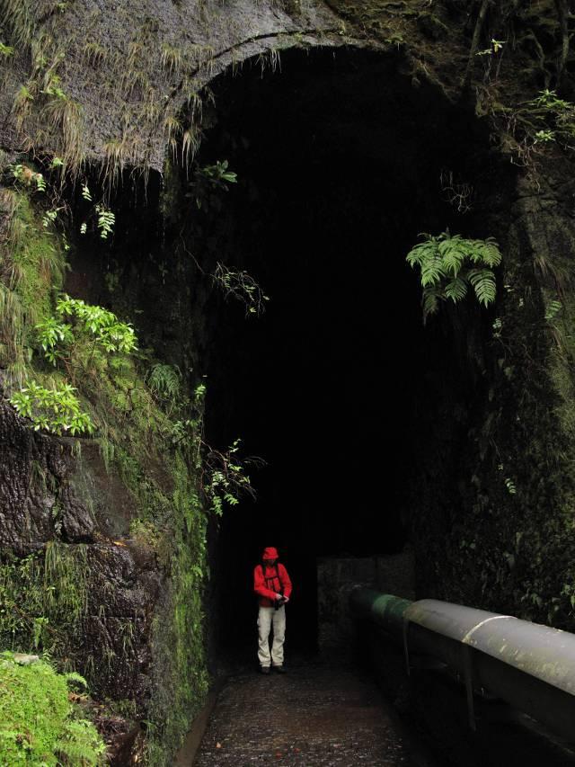 Reitertunnel Madeira | waldspaziergang.org