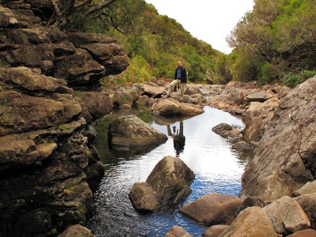 Madeira Rosmarin-Levada | Waldspaziergang.org