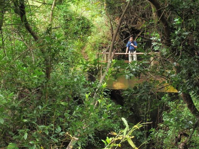Brücke über Ribeira Funda | Waldspaziergang.org