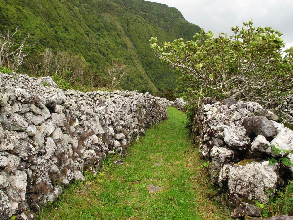 Wanderweg hinter Faja Grande | Waldspaziergang.org