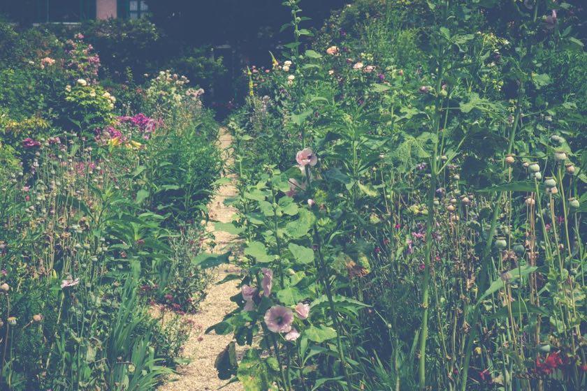 Der Garten von Monet. Clos Normand | Waldspaziergang.org